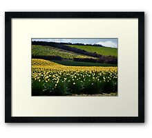 A Host of Golden Daffodils.... Framed Print