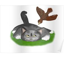 Kitten and Irate Bird Poster