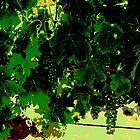 Vine poster by Jenni Tanner