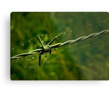 Beauty and the Barbed Wire Metal Print