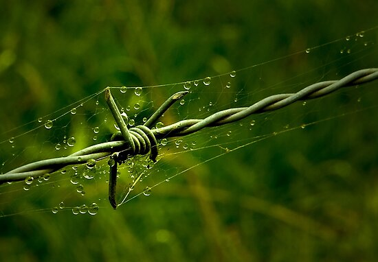 Beauty and the Barbed Wire by Rosalie Dale