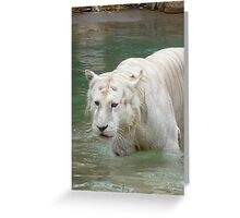 White Bengal Tiger 2 Greeting Card