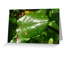 leaf drops Greeting Card
