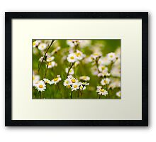 Wildflowers in Tennessee Framed Print