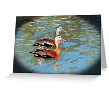 Red Billed Whistling Duck Greeting Card