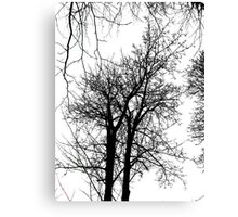 Reaching For The Skies Canvas Print