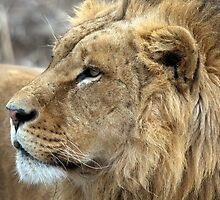 Profile Of A King by Bobby McLeod