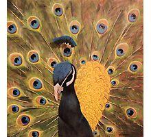 Peacock the Royal Bird Photographic Print
