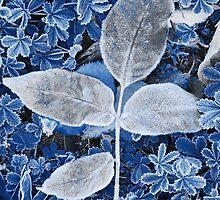 Blue Frost by Nancy Barrett