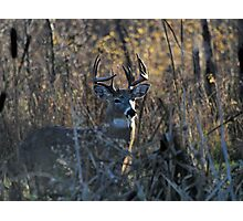 The Buck Stops Here Photographic Print