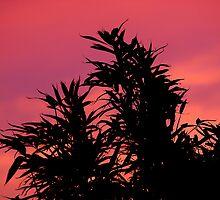 Garden Sunset by Patrick Bongers
