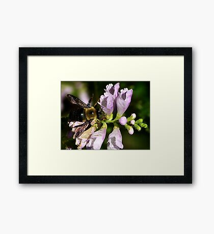Dont Worry BEE Happy Framed Print