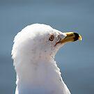 Portrait - Steven Seagull by WalnutHill