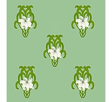 White Lily on Green Flourishes Photographic Print