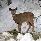 Orphan Deer by tayja