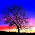 Complementary Colours in Nature by Honor Kyne