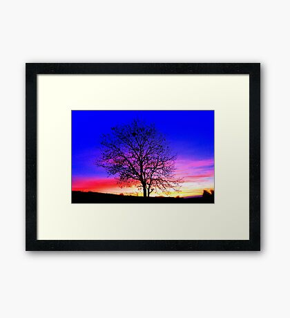 Complementary Colours in Nature Framed Print
