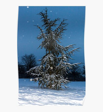 Fir Tree and snow Poster