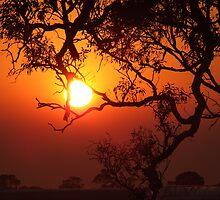 Bushfire sunrise by SDJ1