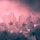 Pink relic blossom by Sue Morgan