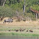Wildlife Paradise, Moremi Game Reserve, Botswana, Africa by Adrian Paul