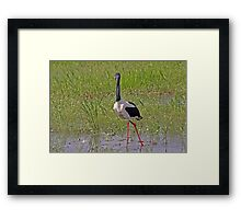 Black-necked Stalk Framed Print