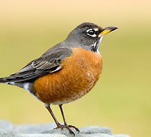 Little Robin Redbreast  by Bonnie T.  Barry