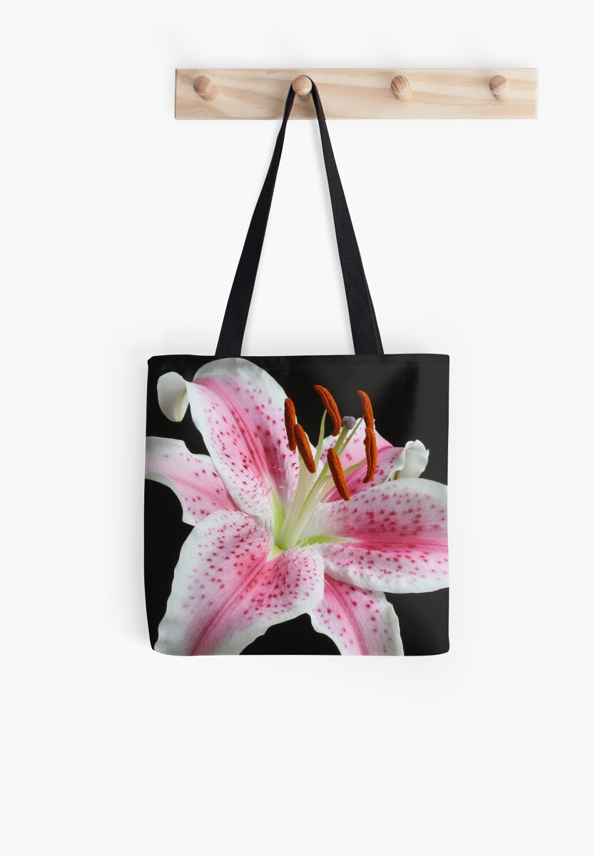 Stargazer Lily 2 by Rachel Stickney