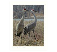 Cherokee Marsh Sandhill Cranes  Art Print