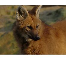Maned Wolf Photographic Print