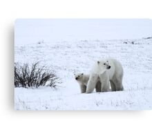 Polar Bear Mother & Cub in the Tundra Canvas Print