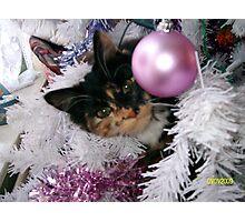 Feline Bauble Photographic Print