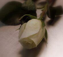Simplistic Beauty by rasnidreamer