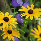 Pretty Garden Life by Tracy Wazny