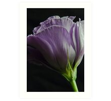 Lavender Love Art Print