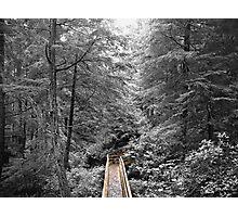 Tongass National Forest, Alaska Photographic Print
