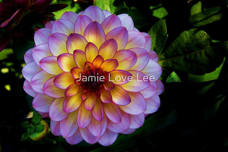 Beauty by Jamie Lee