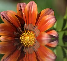 Burnt Orange by Donna Adamski