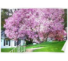 Spring in Bloom Poster