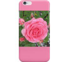 Pink Rose Carnation Flower iPhone Case/Skin