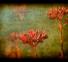 Letters from Grandma by Jonicool