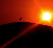 Pronghorn Sunset - Cisco Utah by Rick Schafer