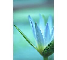 soft daze Photographic Print