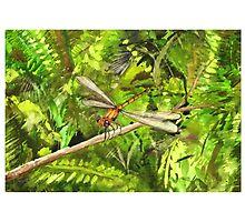 Dragonfly by KeLu