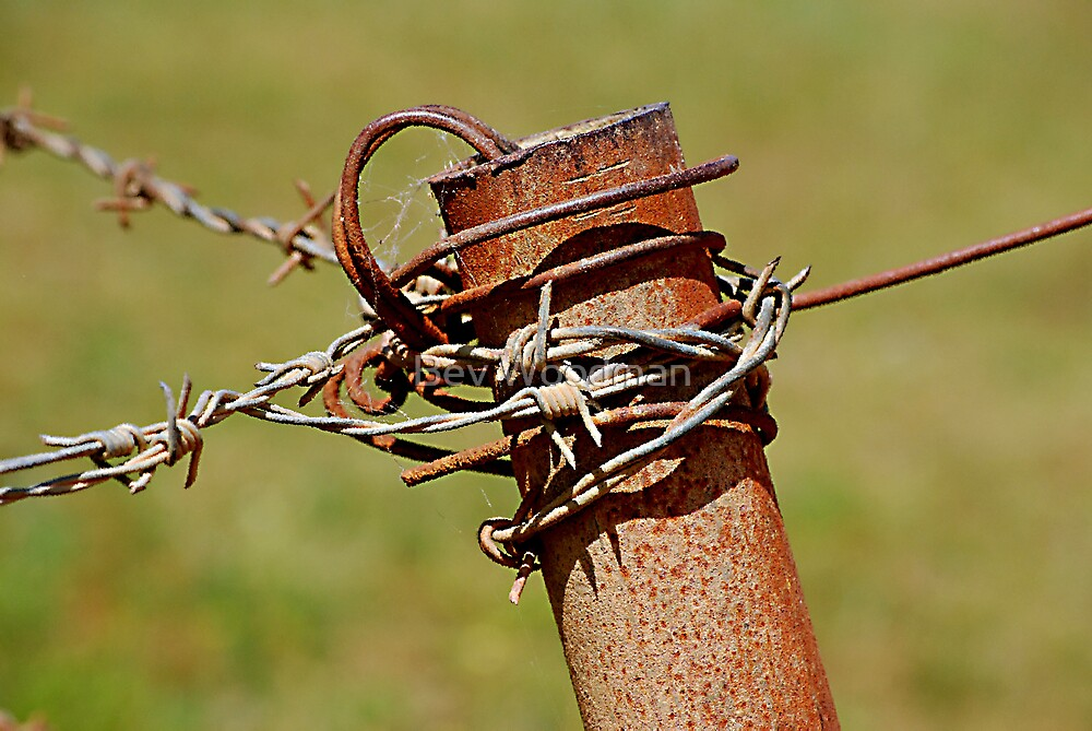 Barbed Containment by Bev Woodman