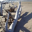Driftwood Flinders Beach by Lou Van Loon