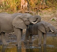 Down by the waterhole by Erik Schlogl
