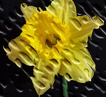 Craquelere Daffodil by SharonD