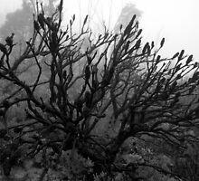 Fire & Fog by Plonko