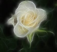 The White Rose by Galyna Schmid